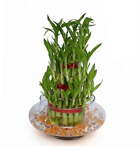 3 layer bamboo plant